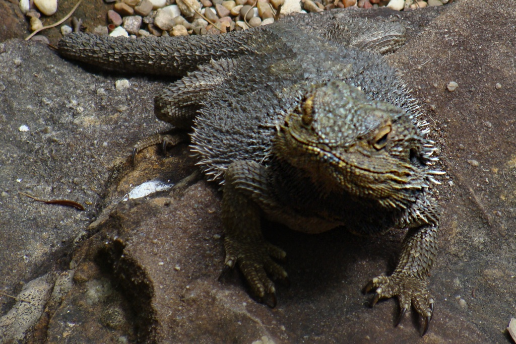 1203548644_lizard.jpg