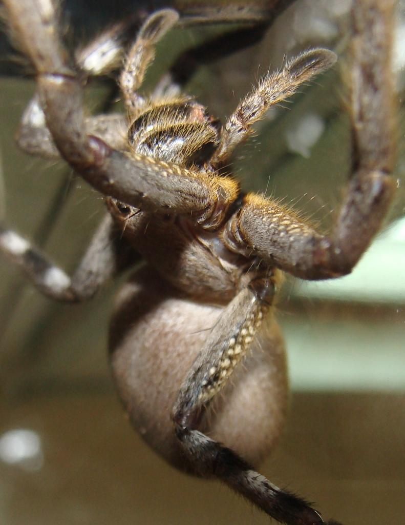 1207556587_spider.jpg